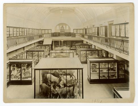 ARC/HMG/PH/002/004/002/011 - Natural history gallery