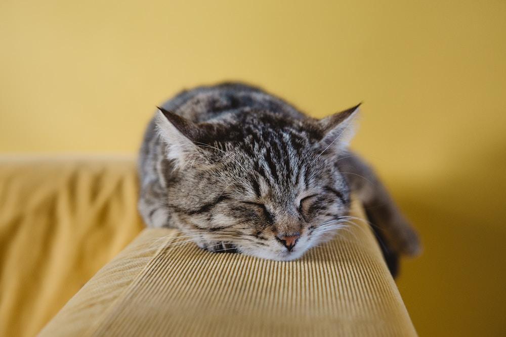 cat-festival-beckenham