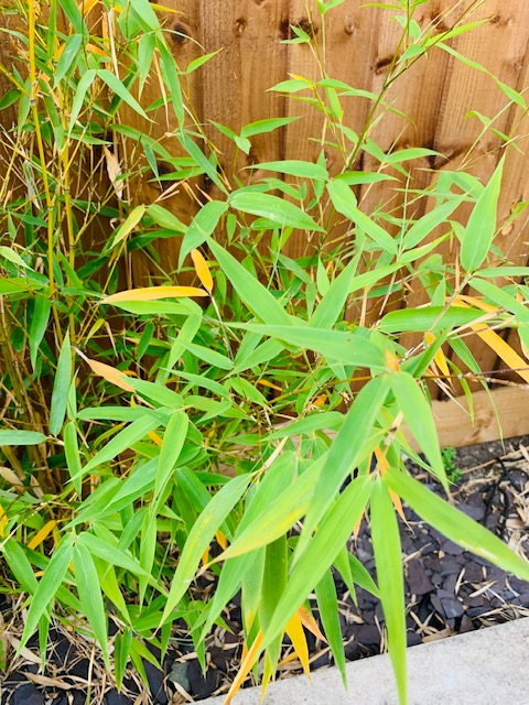 bamboo%202