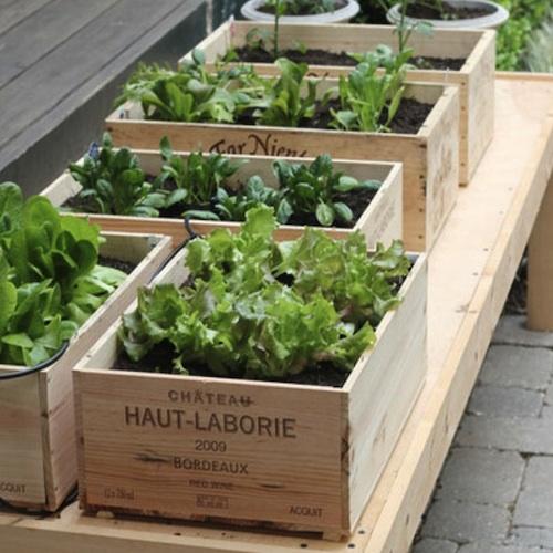 Wine-box-planter-salad-garden